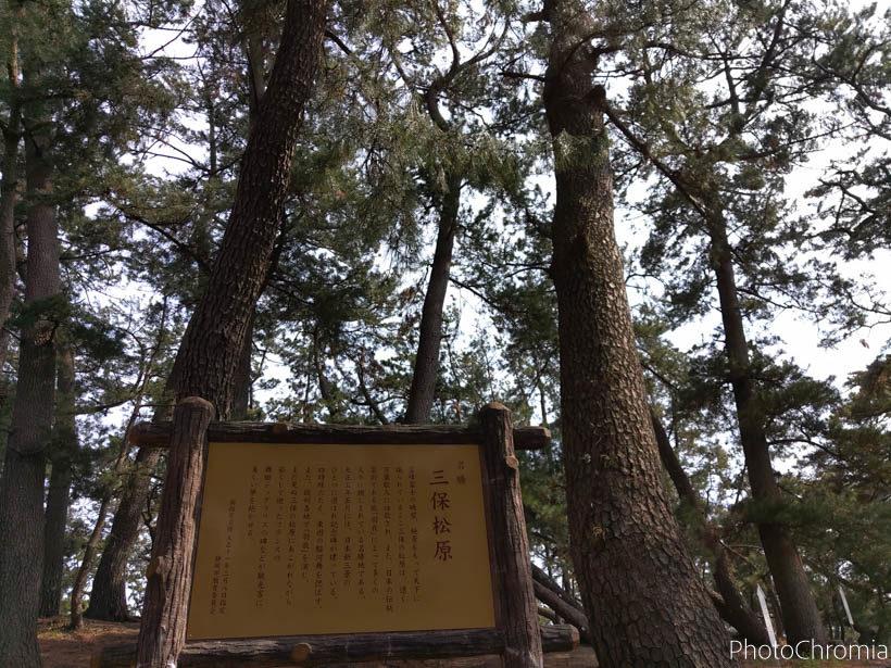 190327_mihonomatsubara_005